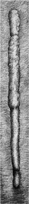 Materiaalstudio voor Droombeeld 1998 Werkstuk door Peter Rosier