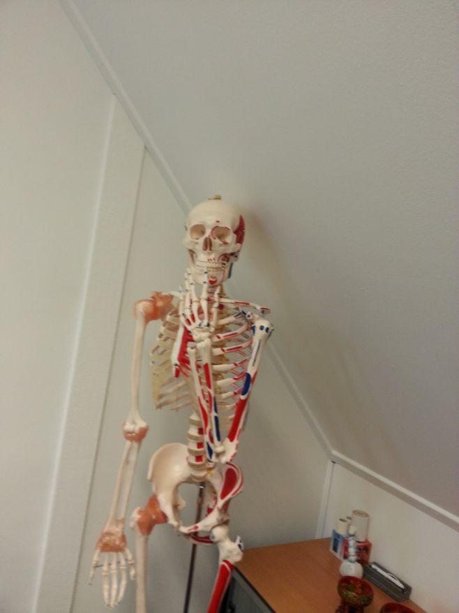 Cursus Anatomie en Fysiologie- skelet-sepia-opleidingen